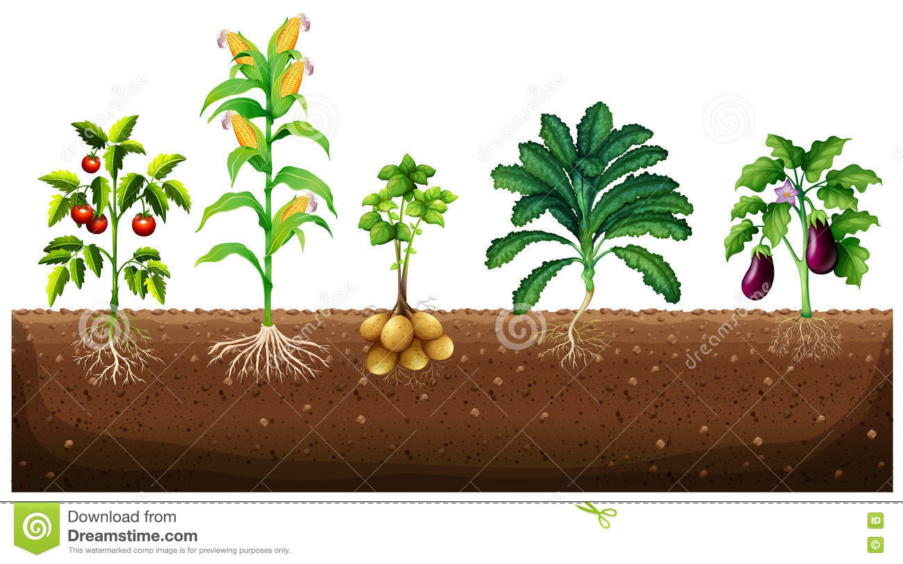 A garden plant clipart clipground for Different garden plants