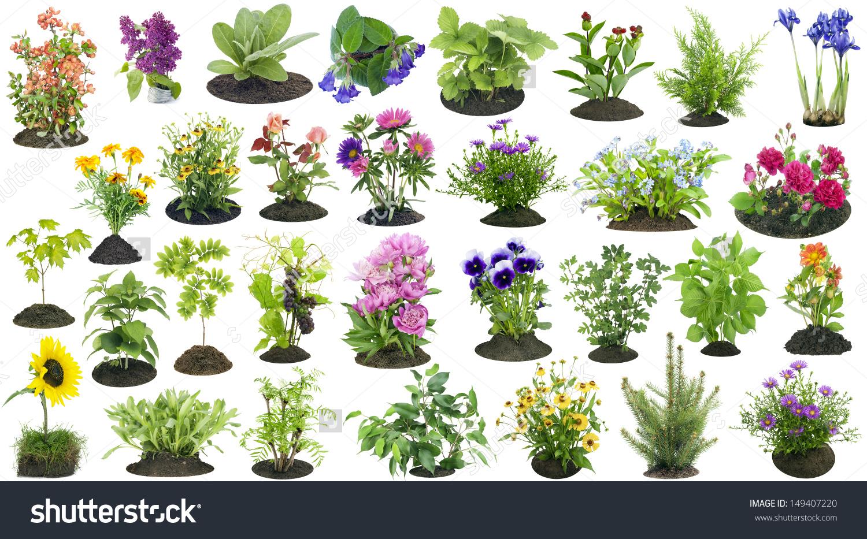 Various Garden Plants Flowers Grow On Stock Photo 149407220.