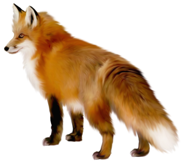 Download Artistic Fox Clipart HQ PNG Image.