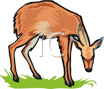 Clipart of a Deer Grazing On Grass.