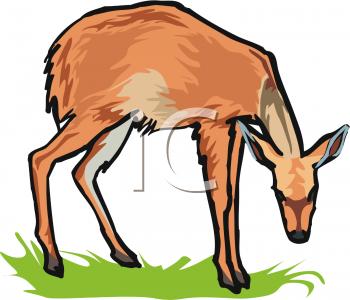 Clipart of a Deer Grazing On Grass.