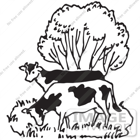 Clipart Of Cows Grazing By A Tree In Black And White.