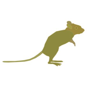 Green Mouse clipart, cliparts of Green Mouse free download.