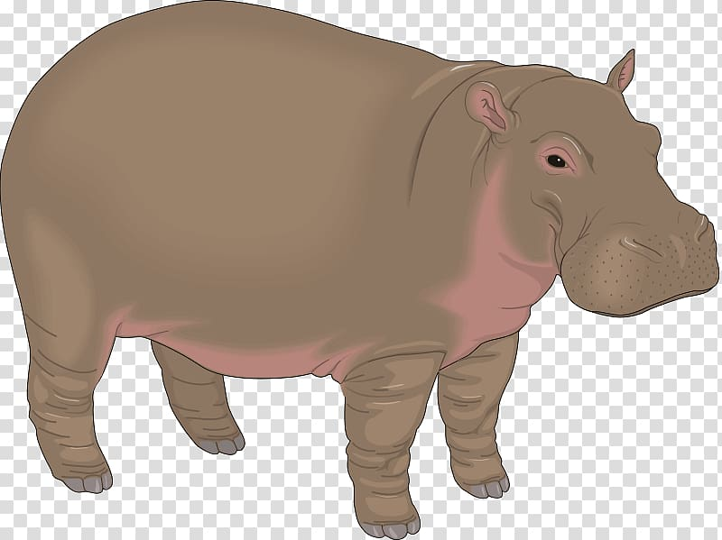 Hippopotamus Baby Hippos Free content , Hippo material.