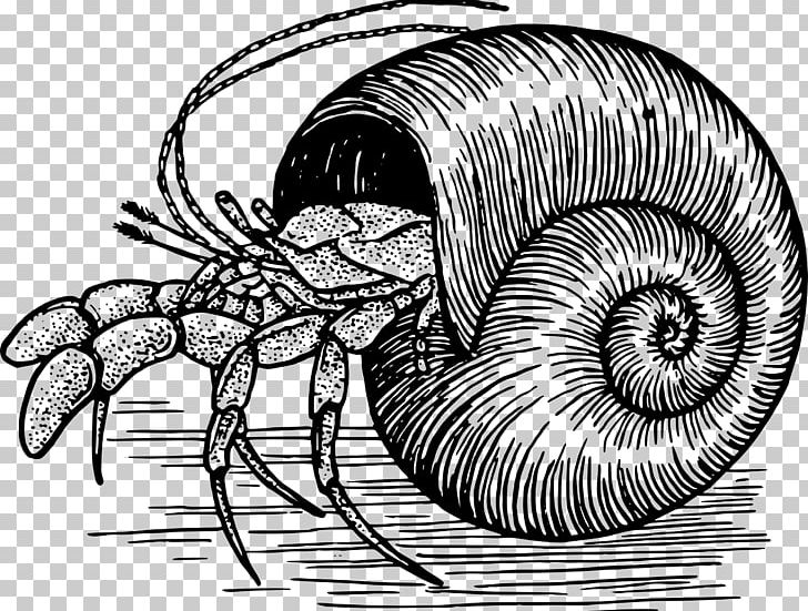 A House For Hermit Crab Drawing PNG, Clipart, Animal.