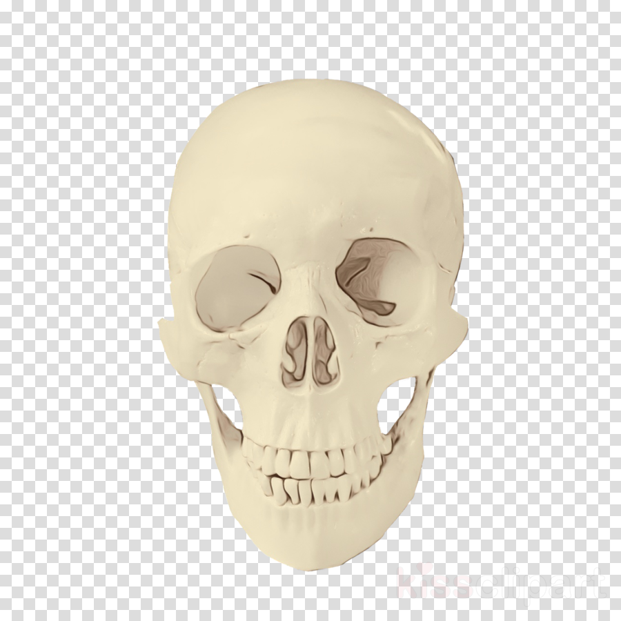 bone skull face head jaw clipart.