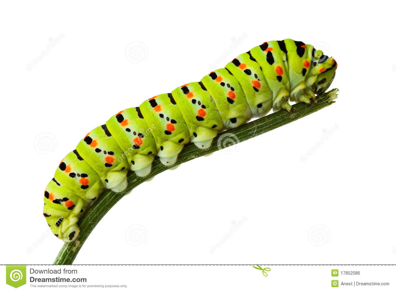 Side View Of Caterpillar On Stem Royalty Free Stock Image.