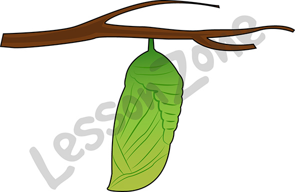 Pupa of butterfly clipart.