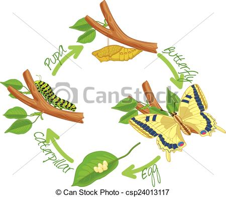 Butterfly larva Stock Illustrations. 330 Butterfly larva clip art.