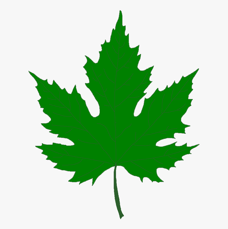 Pin Leaf Clipart Sycamore Tre.