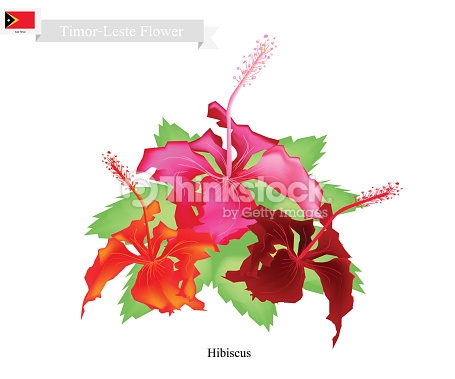 National Flower Of Timor Leste Hibiscus Flowers Vector Art.