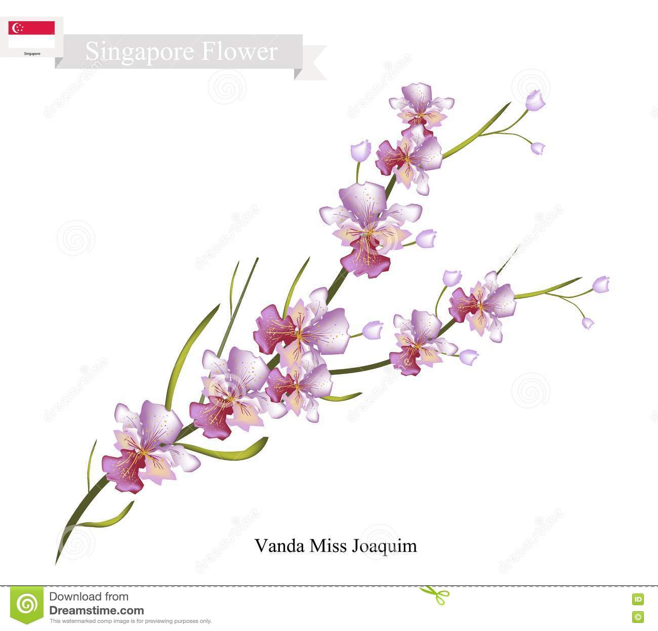 National flower of singapore vanda miss joaquim clipart.