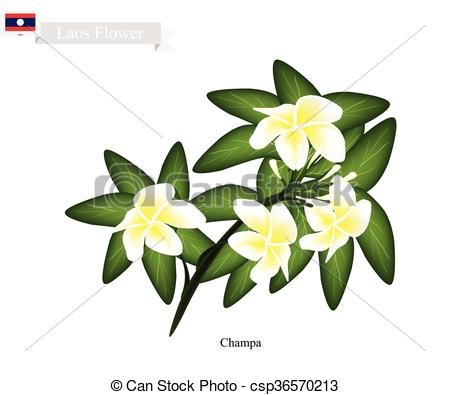 Vector Clip Art of National Flower of Lao, Champa or Plumeria.
