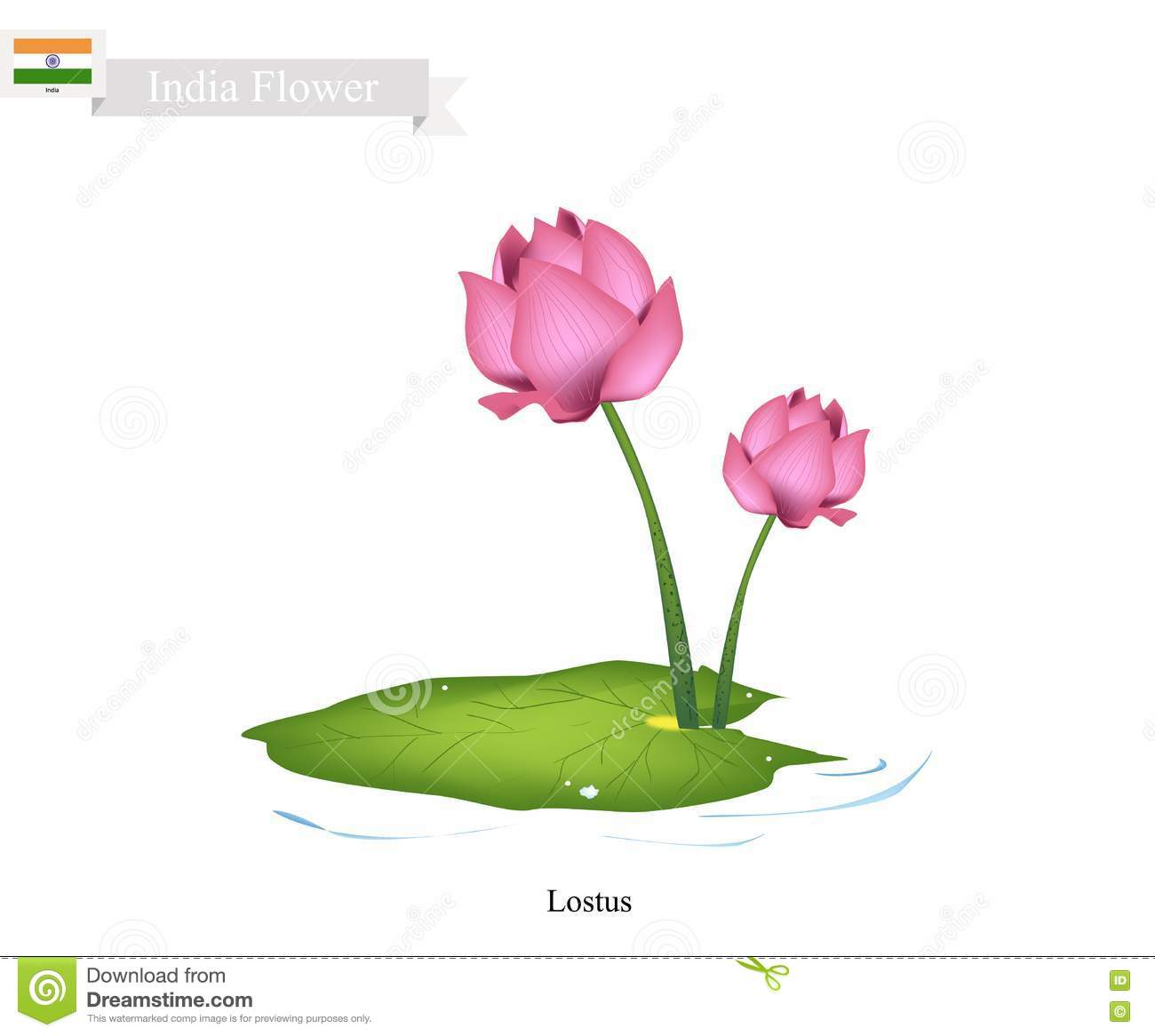 Water Lily, The National Flower Of India Stock Vector.
