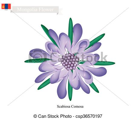 EPS Vectors of Scabiosa Comosa Flower, The National Flower of.