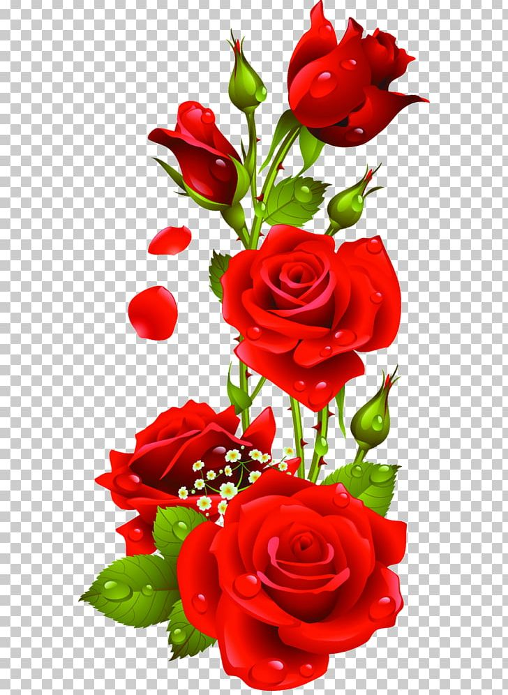 Portable Network Graphics Rose Open Flower PNG, Clipart.