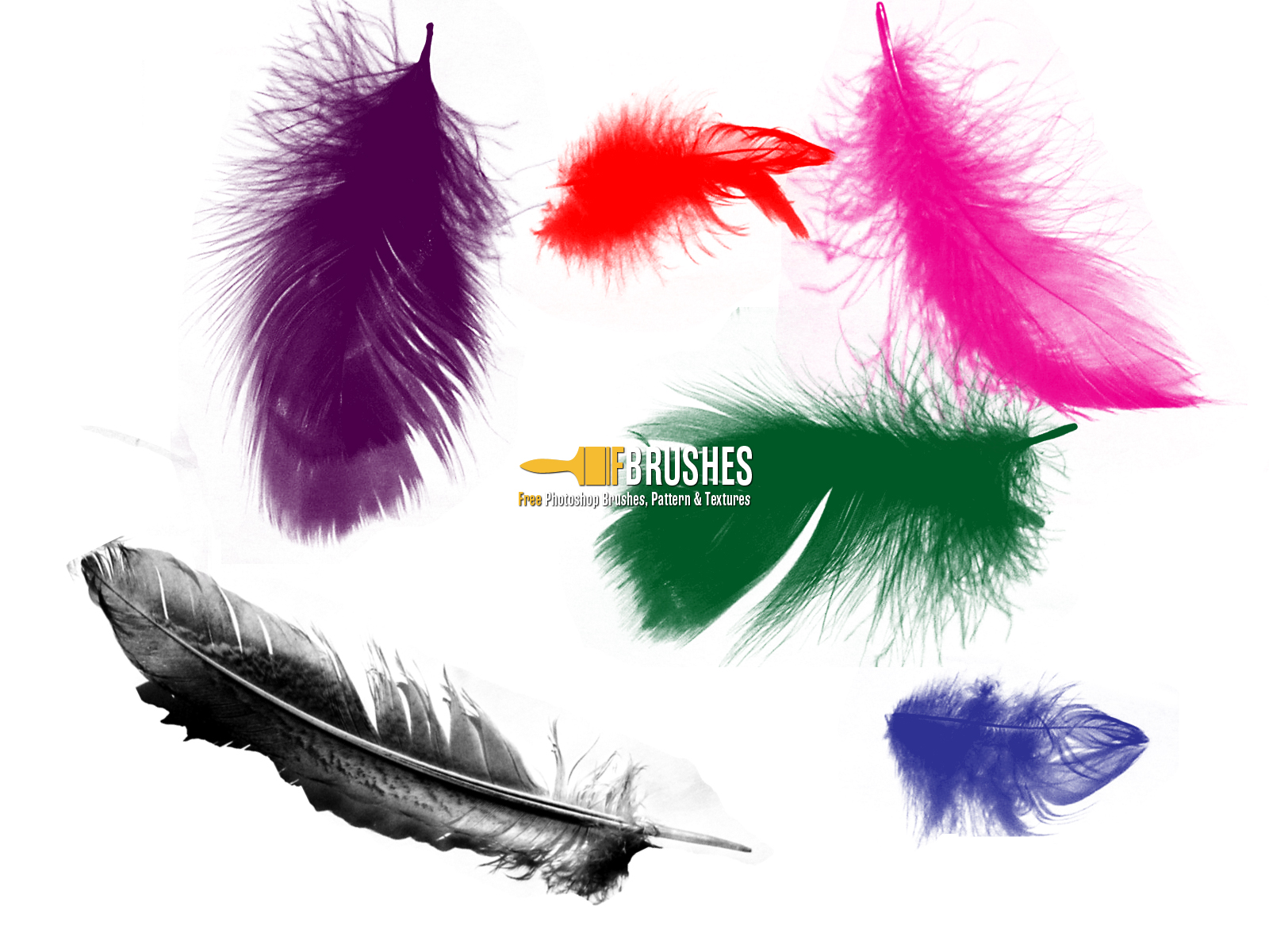 Loose Floating Feathers.