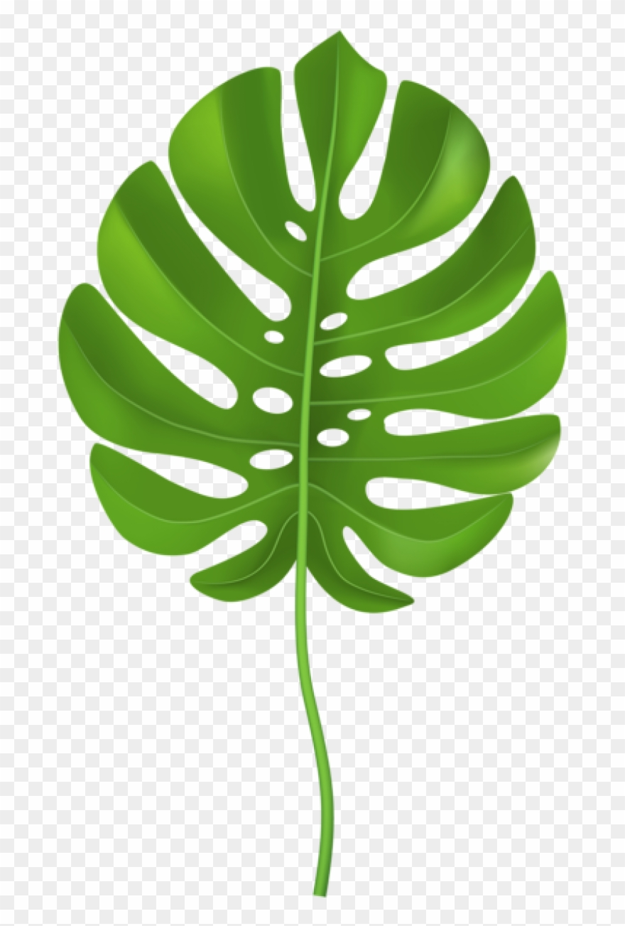 Jungle Leaves Clipart.