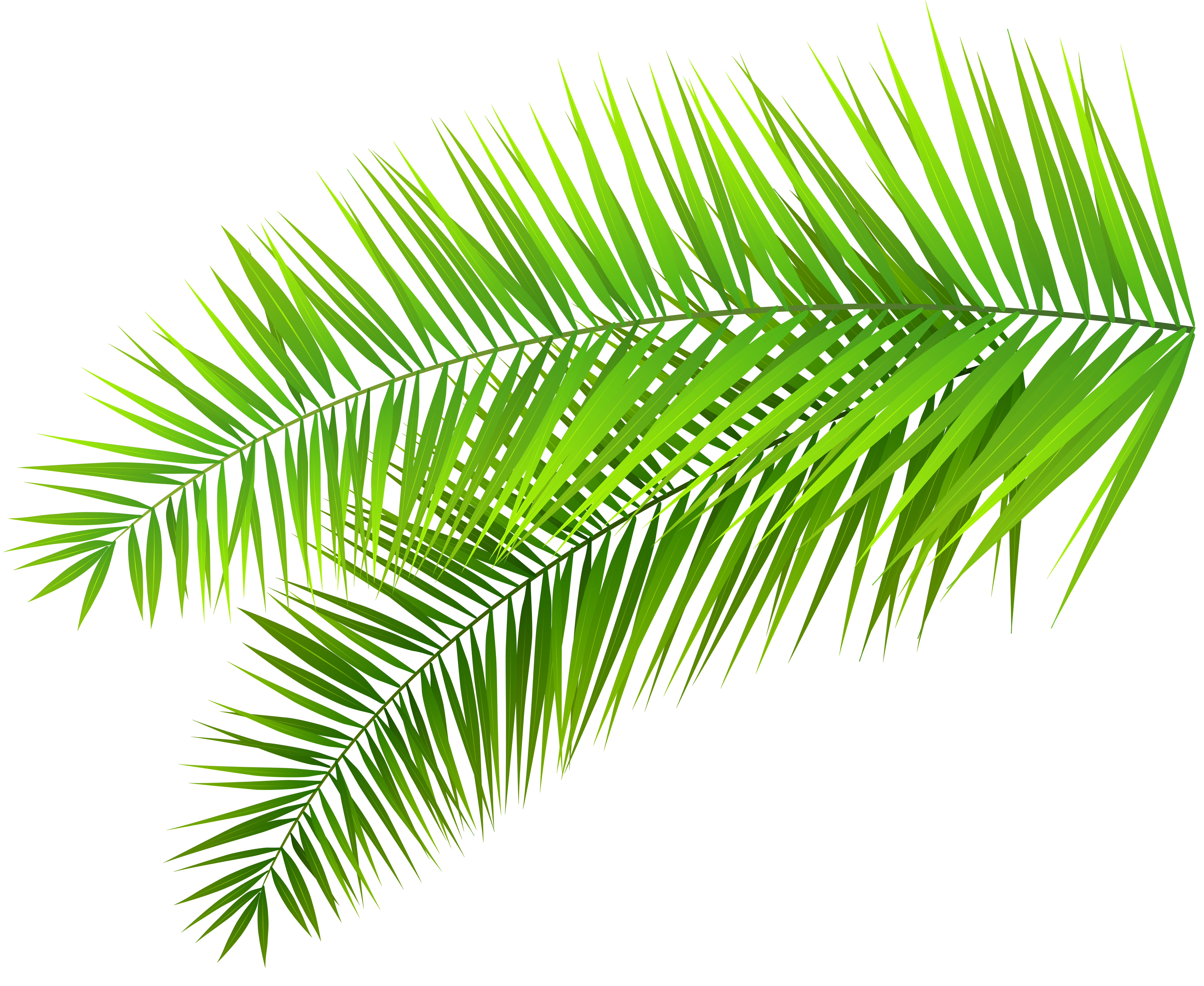Palm Leaves Clipart Png.