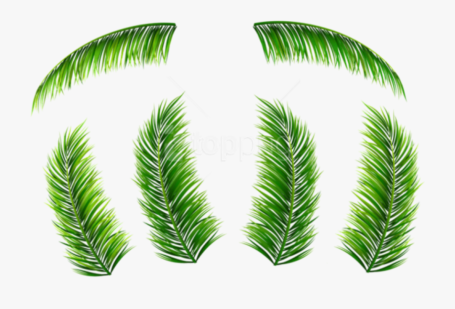 Palm Tree Clipart Watercolor Jpg.