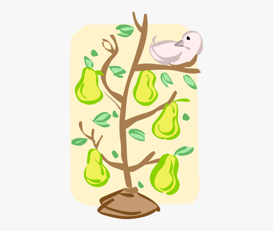 Transparent Pear Tree Png.