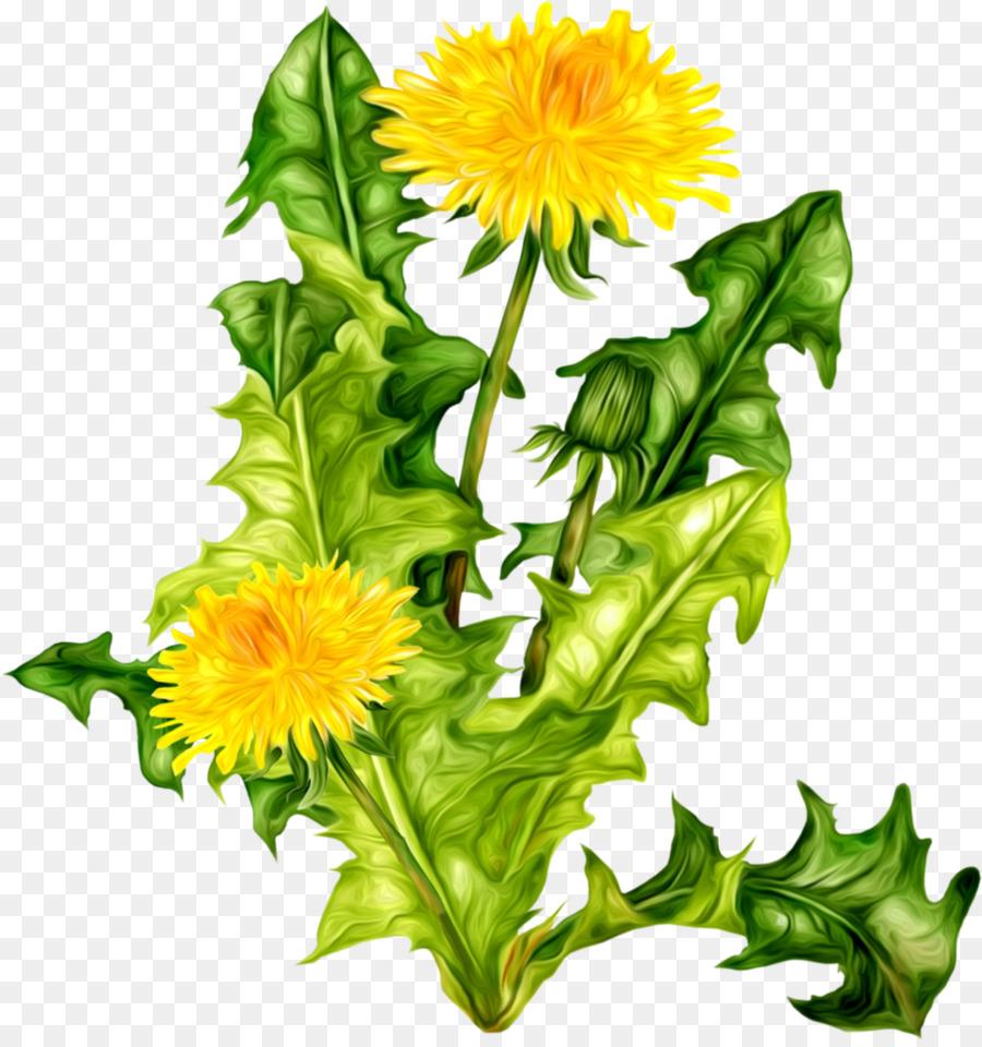 Flower, Plant, Dandelion, transparent png image & clipart free download.