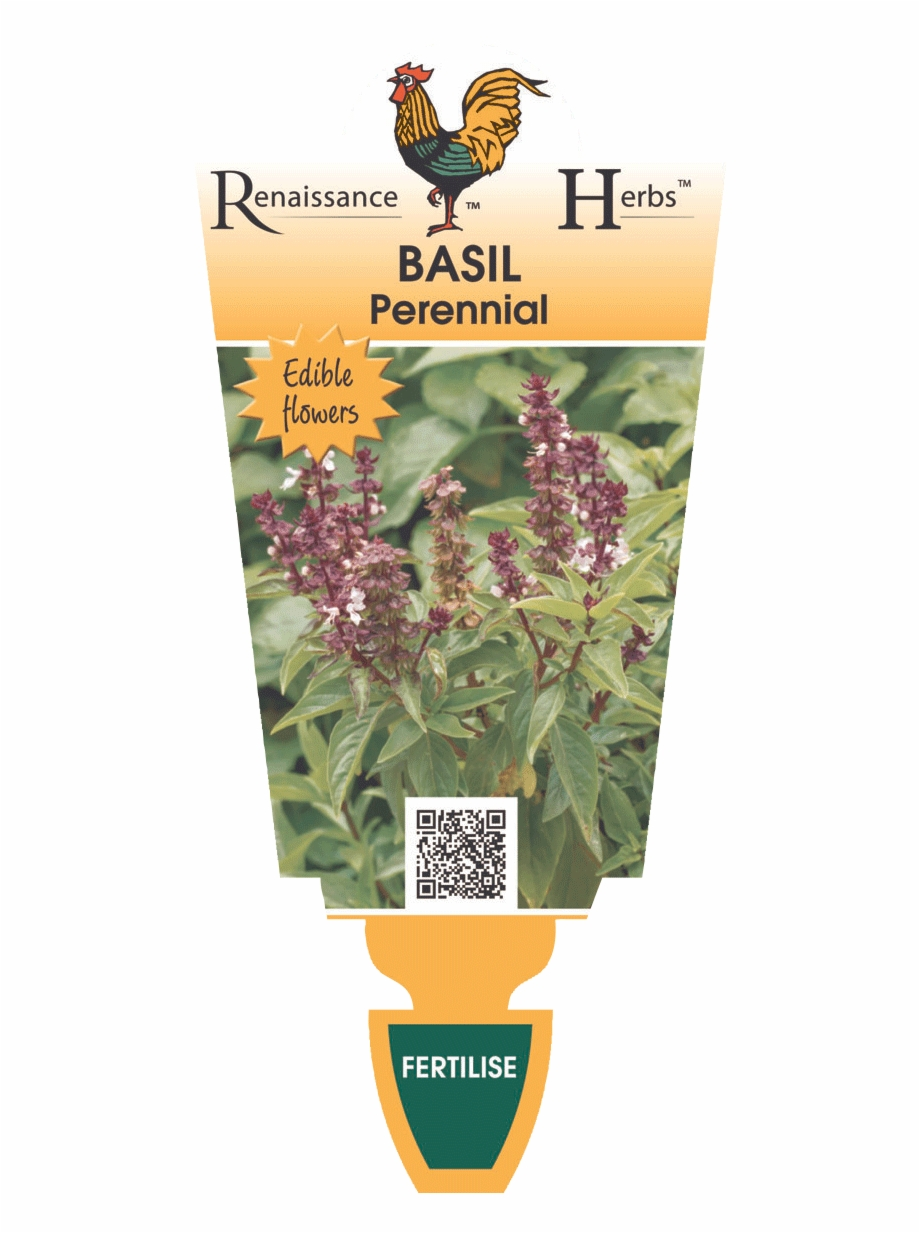 Basil Perennial Free PNG Images & Clipart Download #211220.