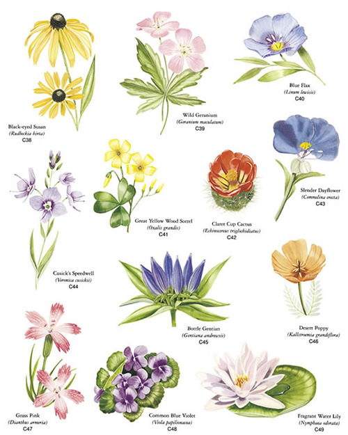 types of inflorescences image.