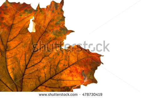 Autumn Bright Corner Isolated Leaves Banco de Imagens, Fotos e.