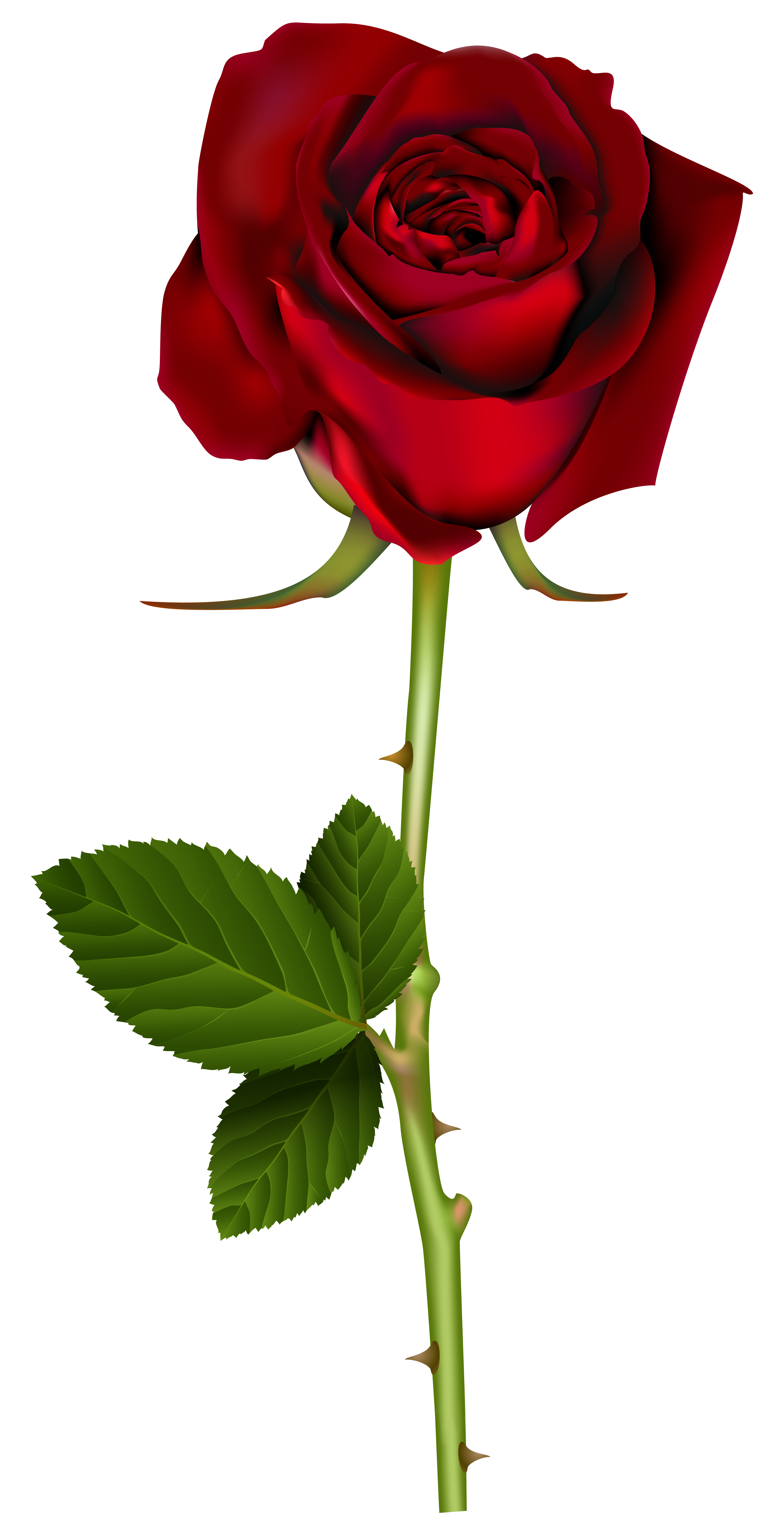 Red Rose PNG Transparent Image.