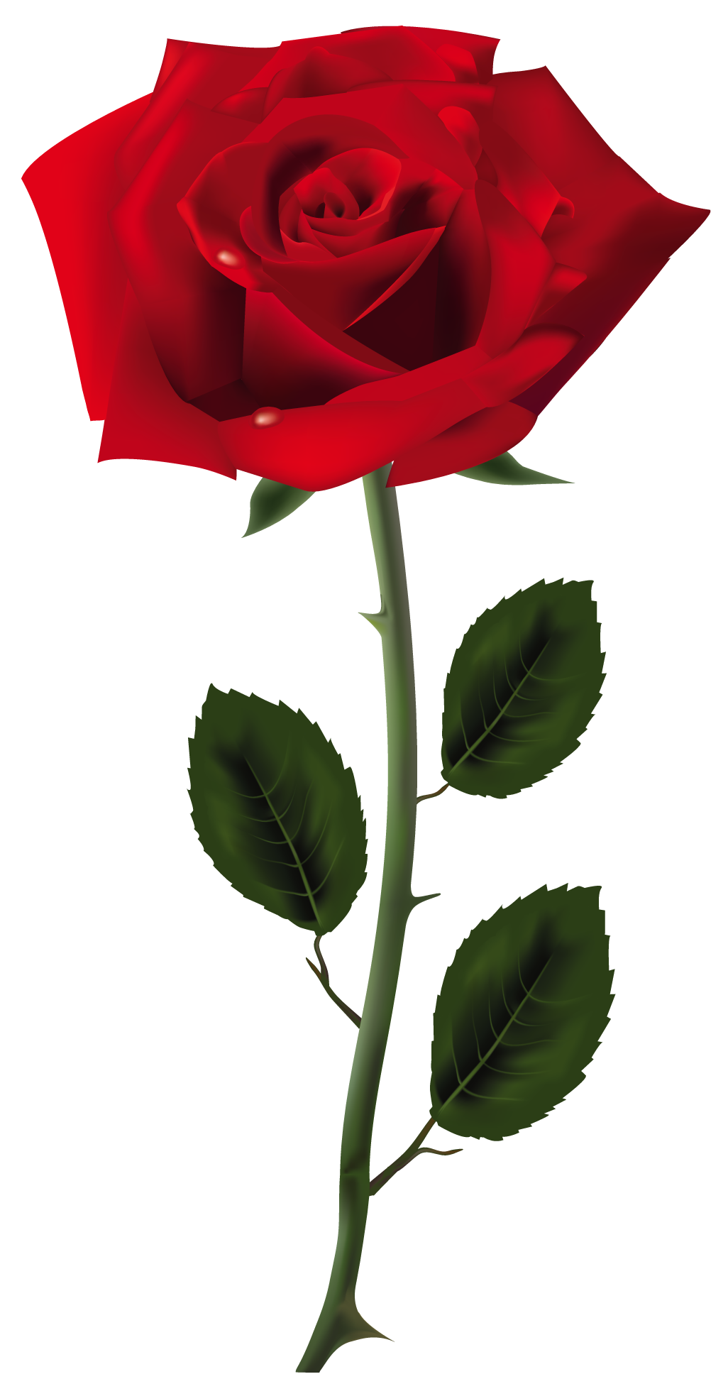 Rose PNG Transparent Images.