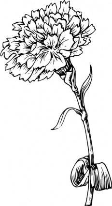 Carnation Flower Clipart Picture Free Download.