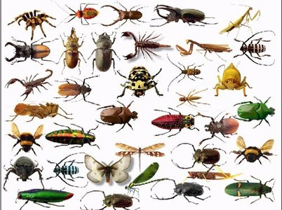 Clip art insects.