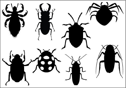 Insects clipart images.