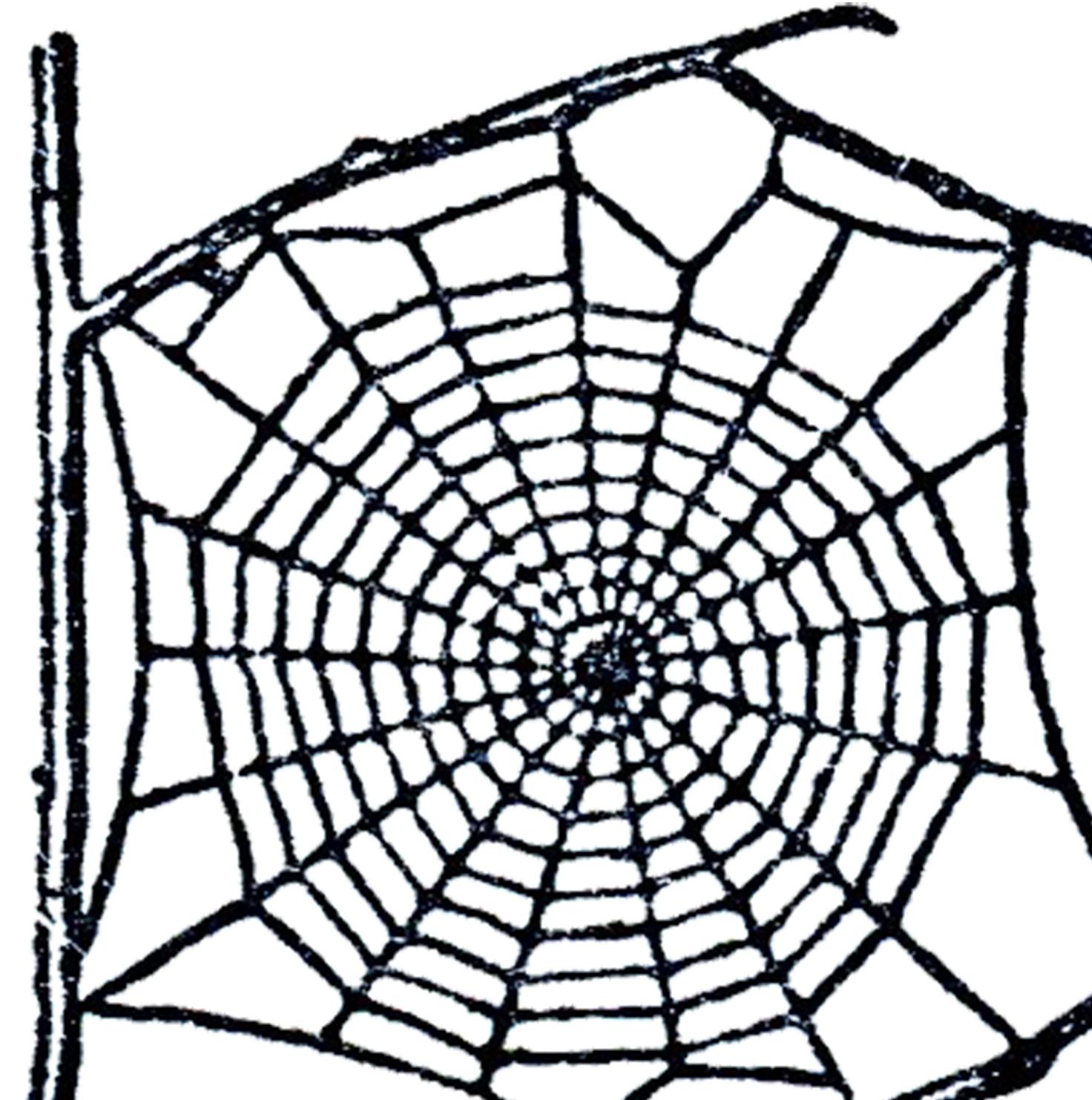 Free Spider Web Clip Art!.