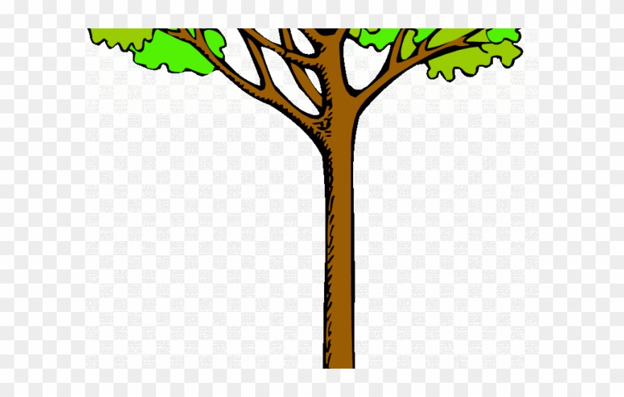 Tree Clipart Clipart Kauri Tree.