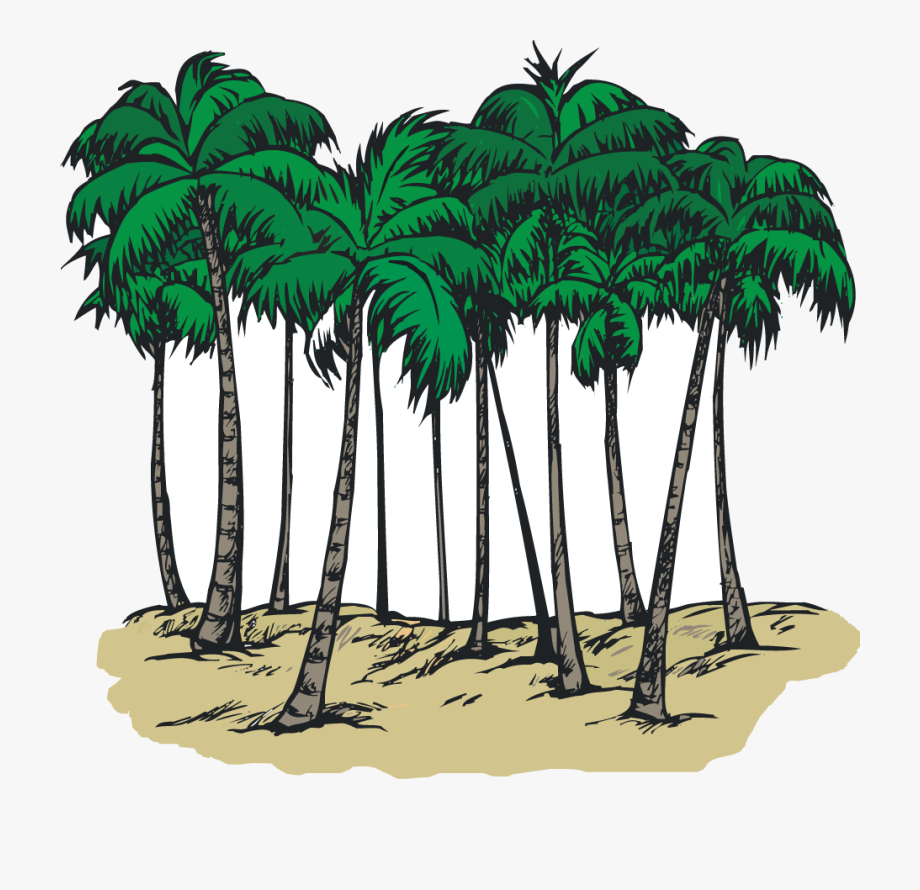 A Group Of Palm Trees.