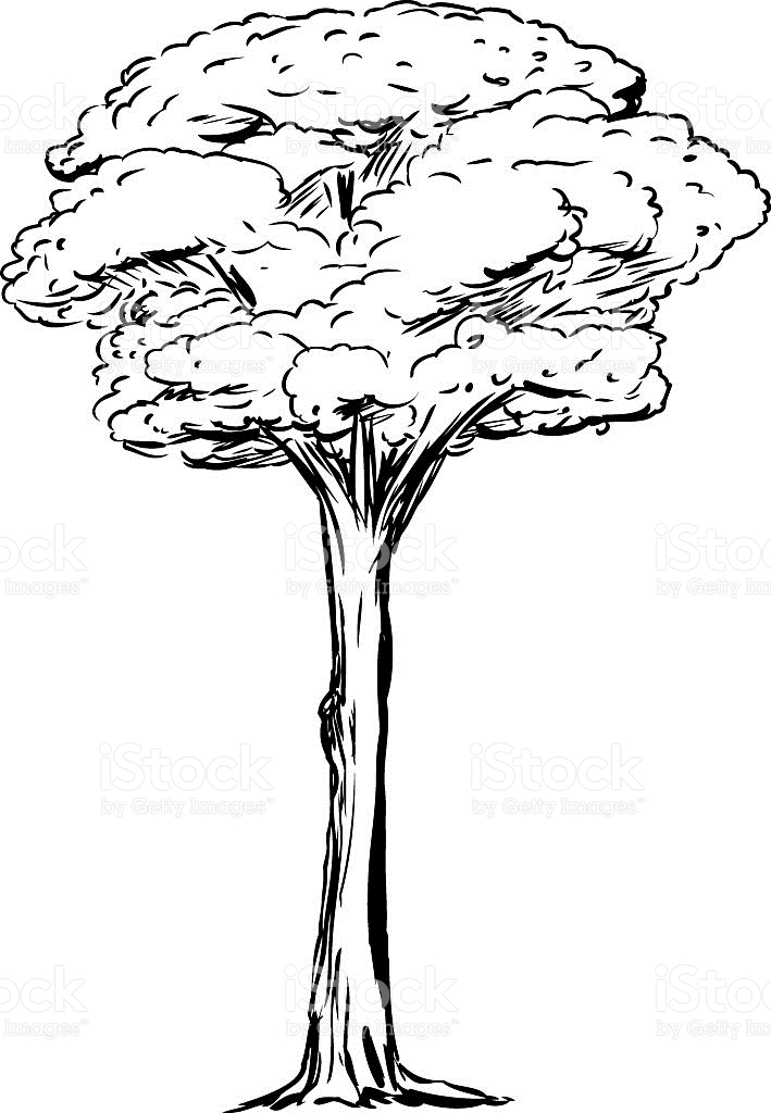 Tall Tree Clipart Black And White.