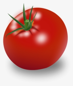 Tomato PNG Images, Free Transparent Tomato Download.