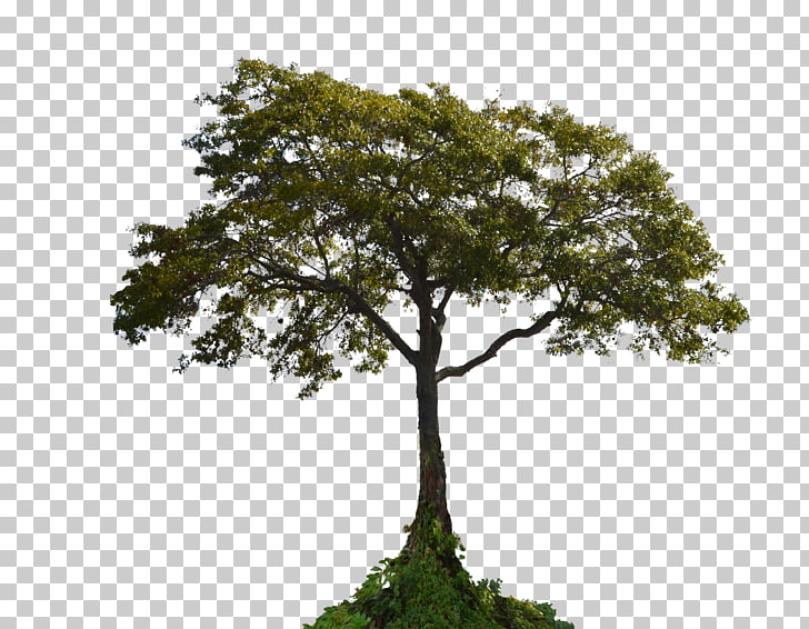 Tutorial Photo manipulation Mask Adobe Creative Cloud, tree.