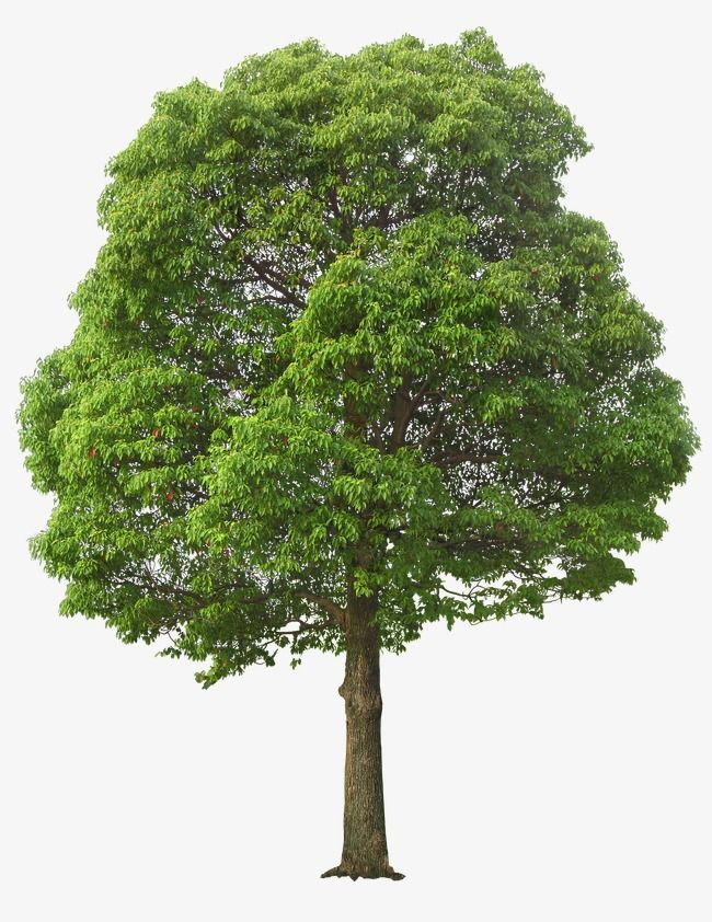 Lush Tree, Tree Clipart, Maunsell, Trees PNG Transparent.