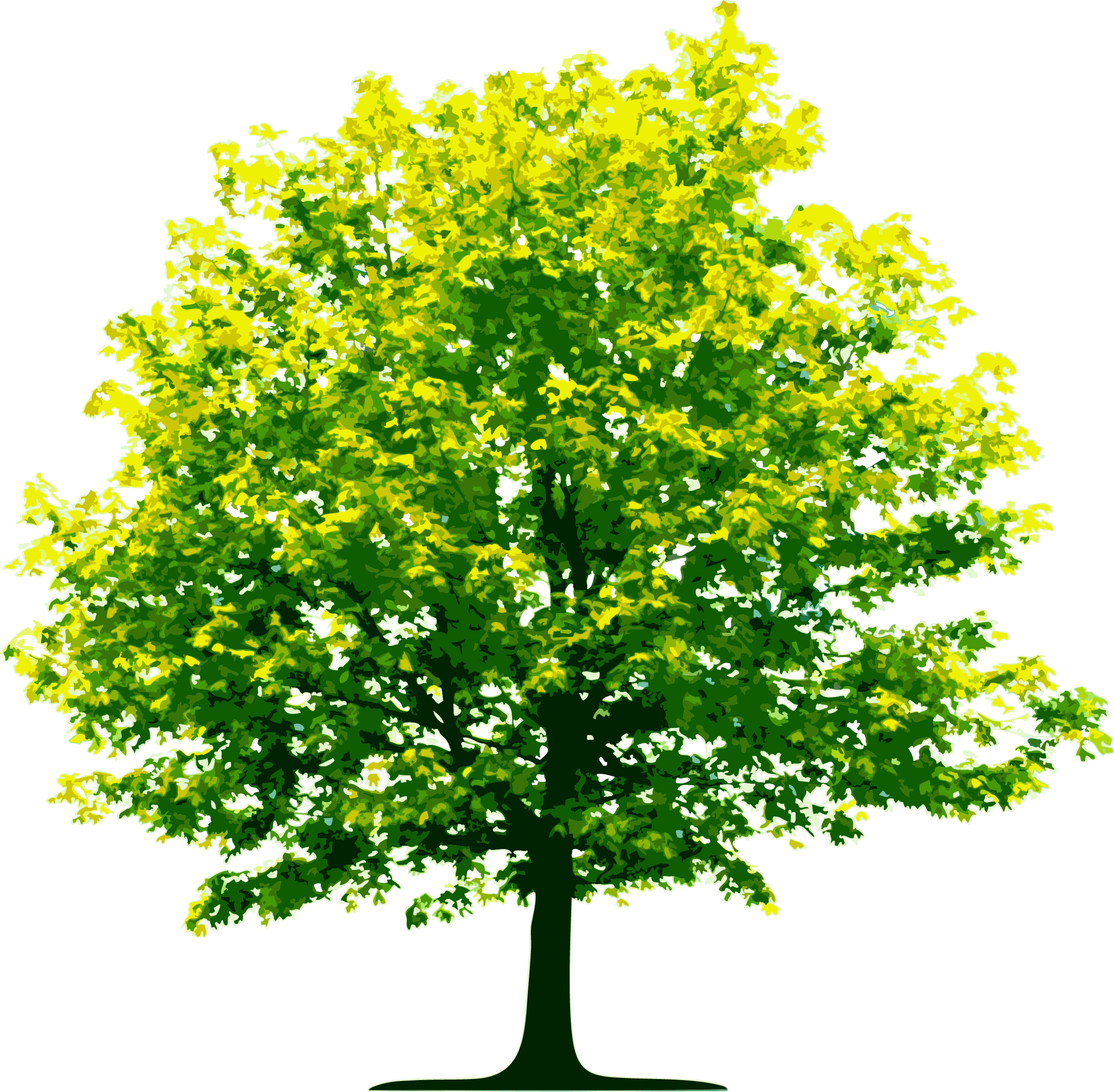 Tree PNG Image.