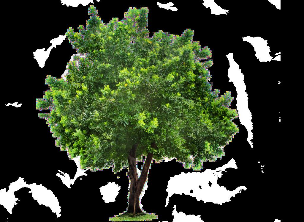 Download Tree PNG Image 1.