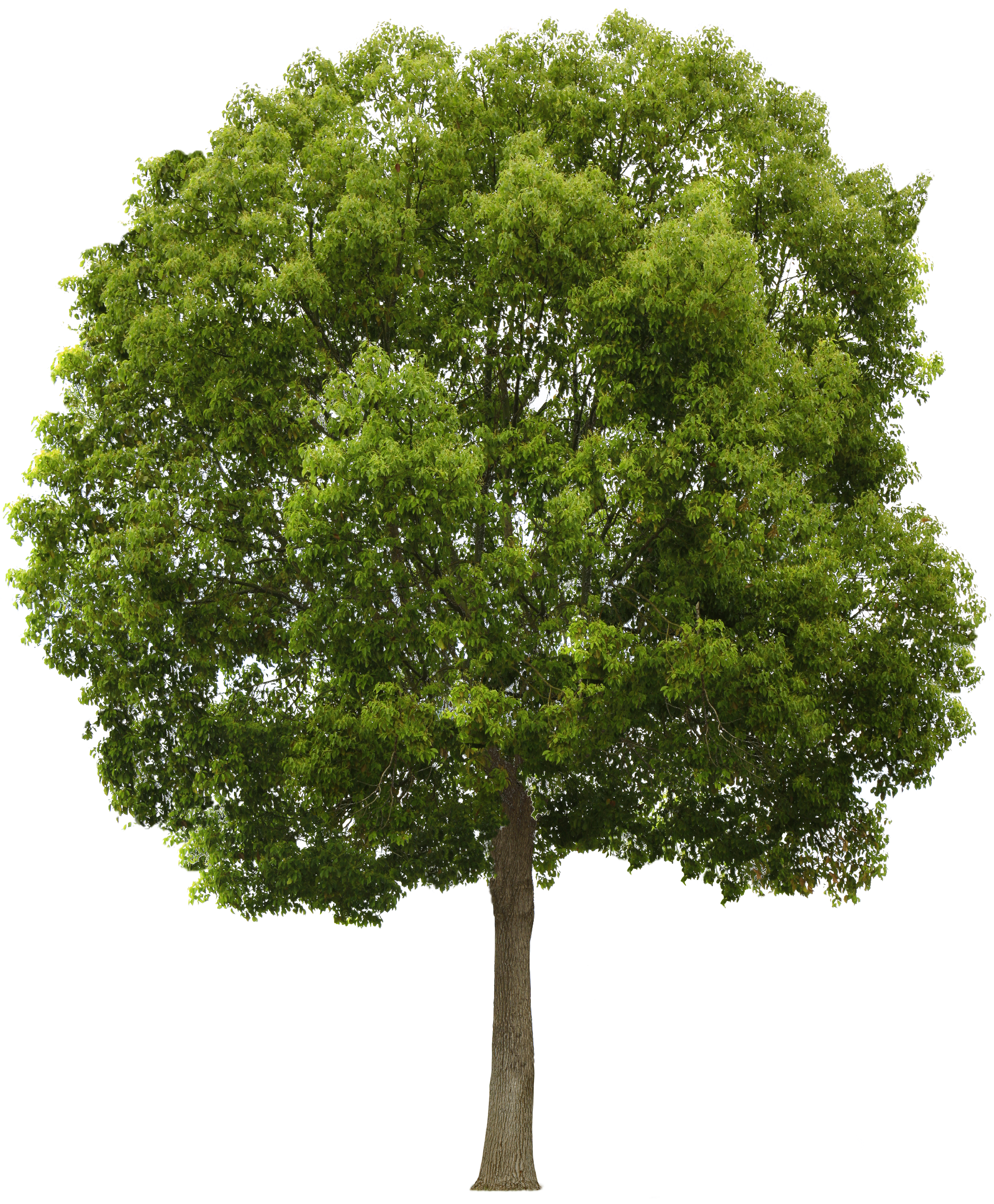 Download Tree PNG 1.