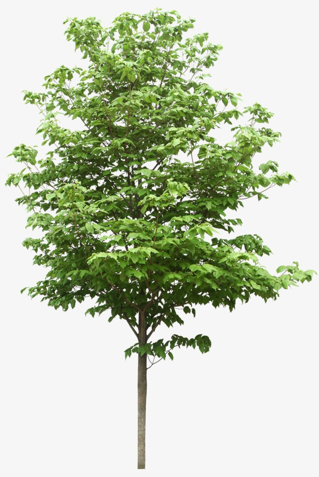 Tree Png & Free Tree.png Transparent Images #239.