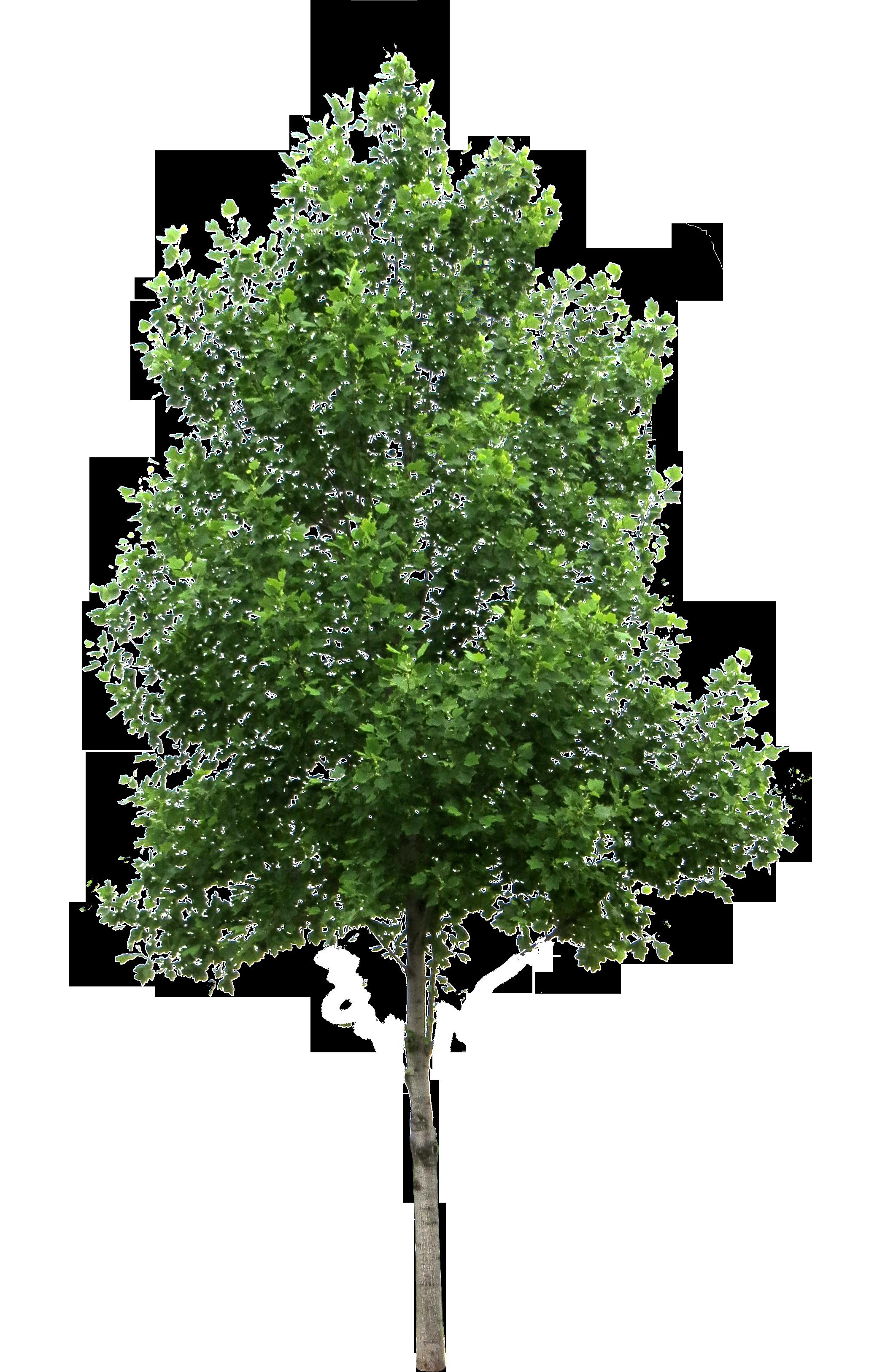 Tree PNG Image.