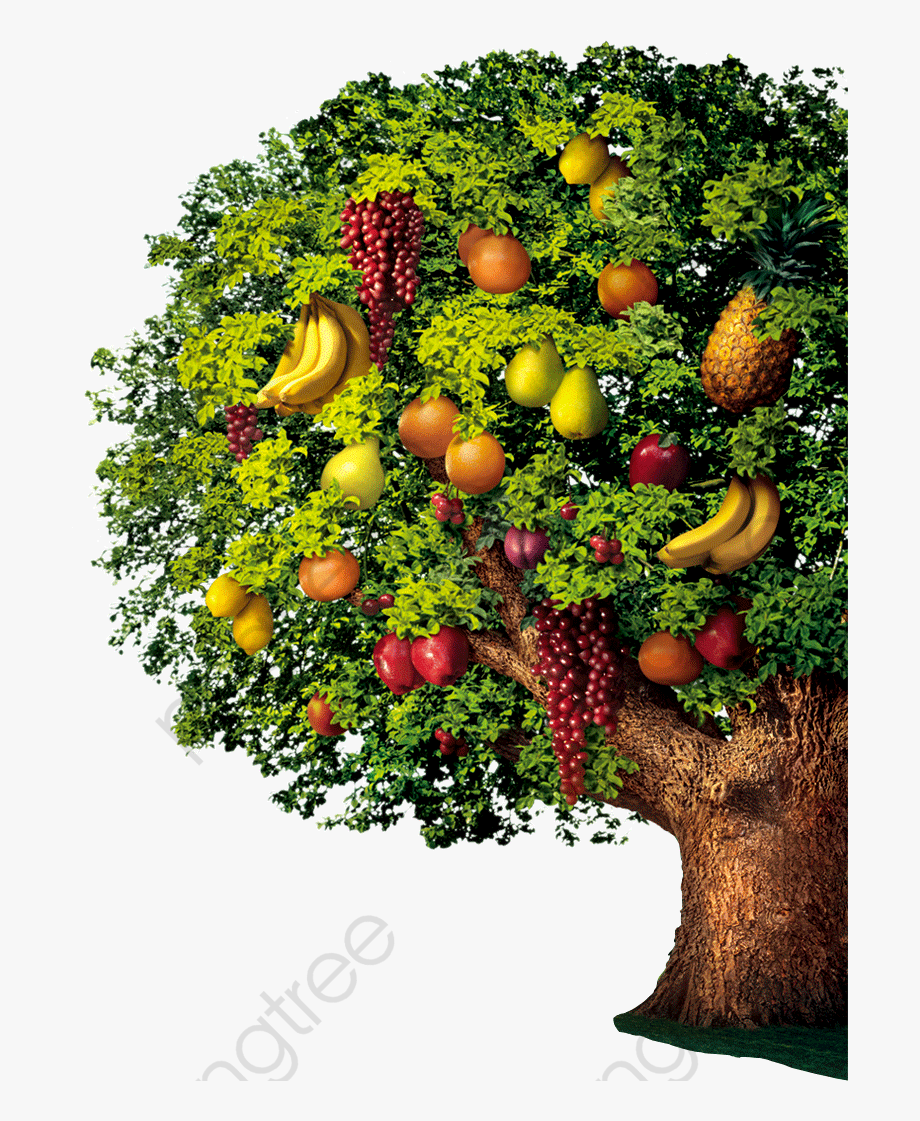 Fruit Clipart Variety Of.