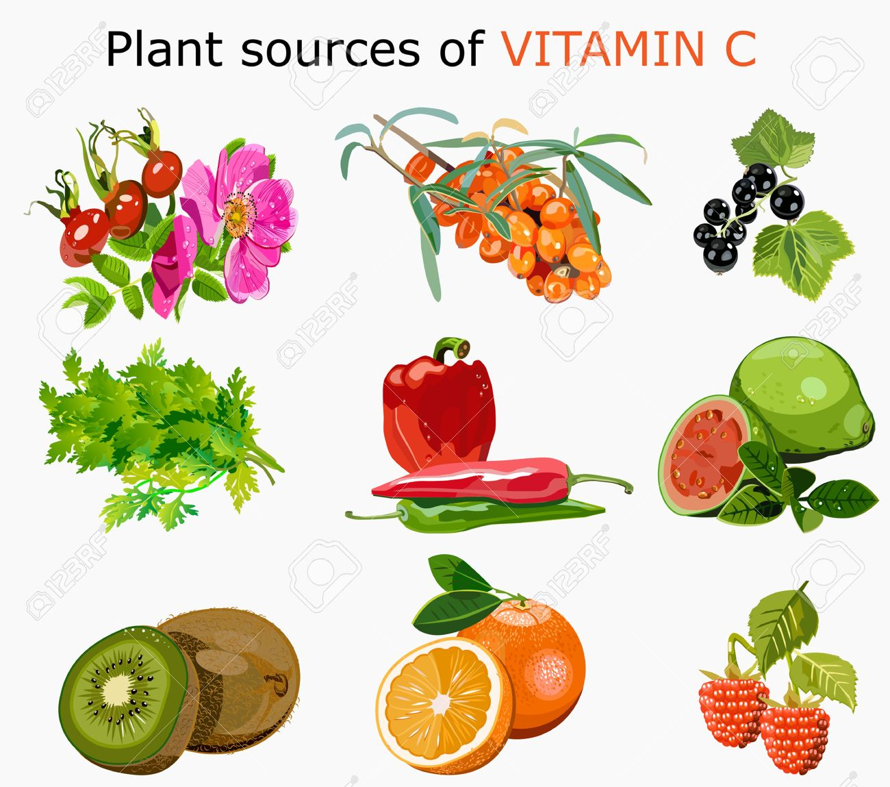 Plant Sources Of Vitamin C Royalty Free Cliparts, Vectors, And.