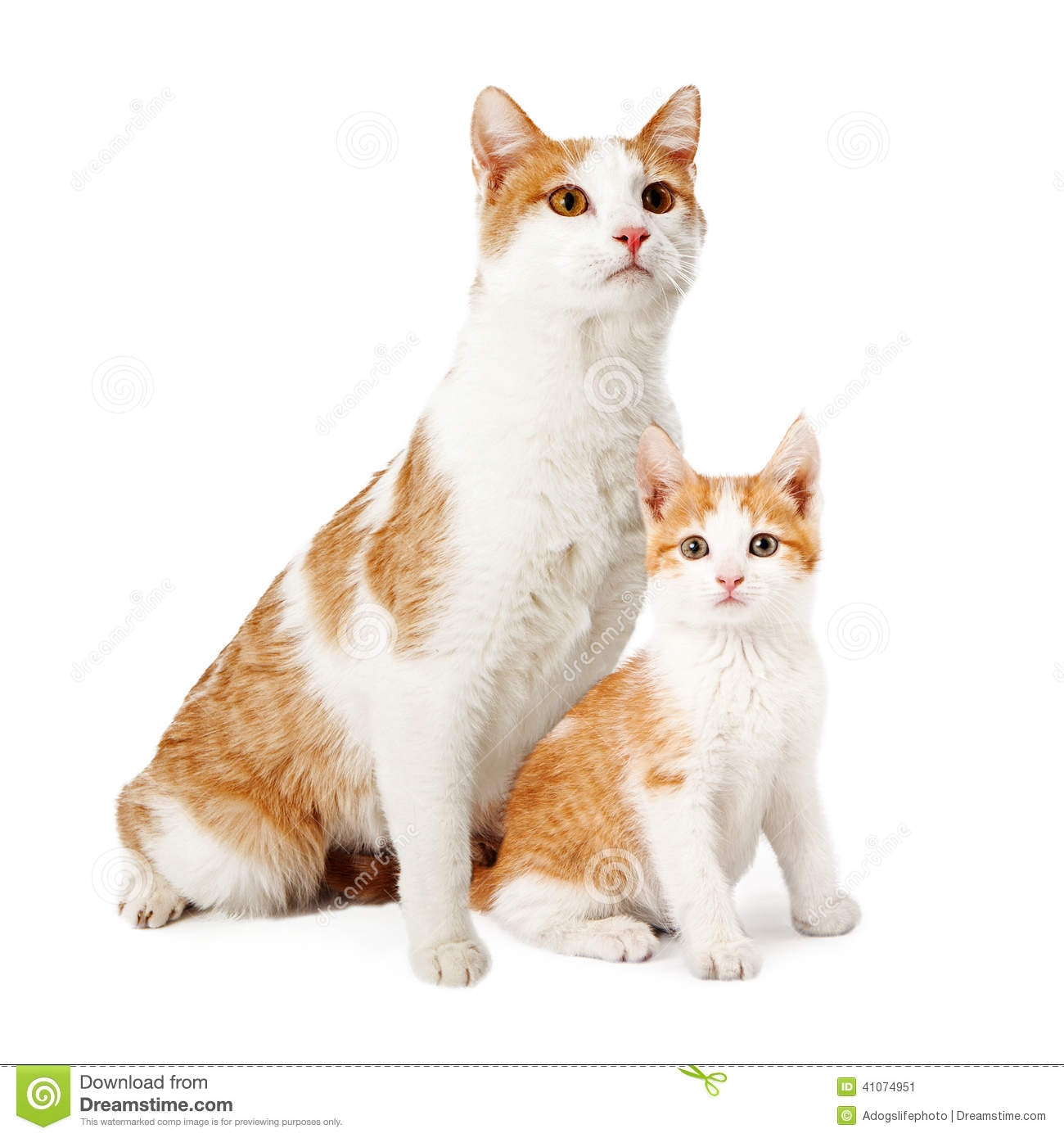 cat and kitten clipart 22ef6804d731b60b5da335d44172e434 cats and.