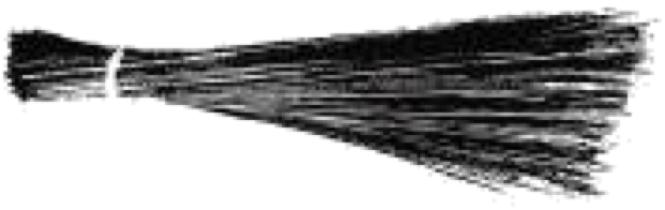 File:AAP Symbol.png.